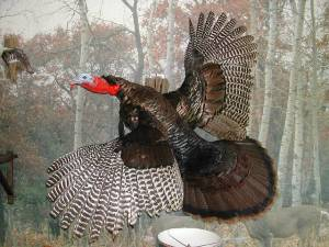 _flying_turkey