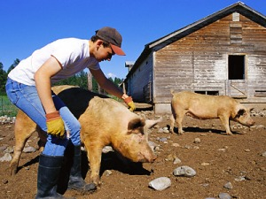 pig-farmer-400ds0622